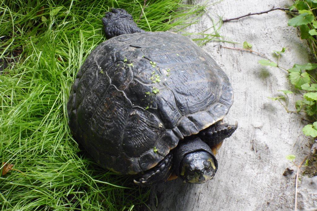 2110 FB Zoo Schildkröten 94
